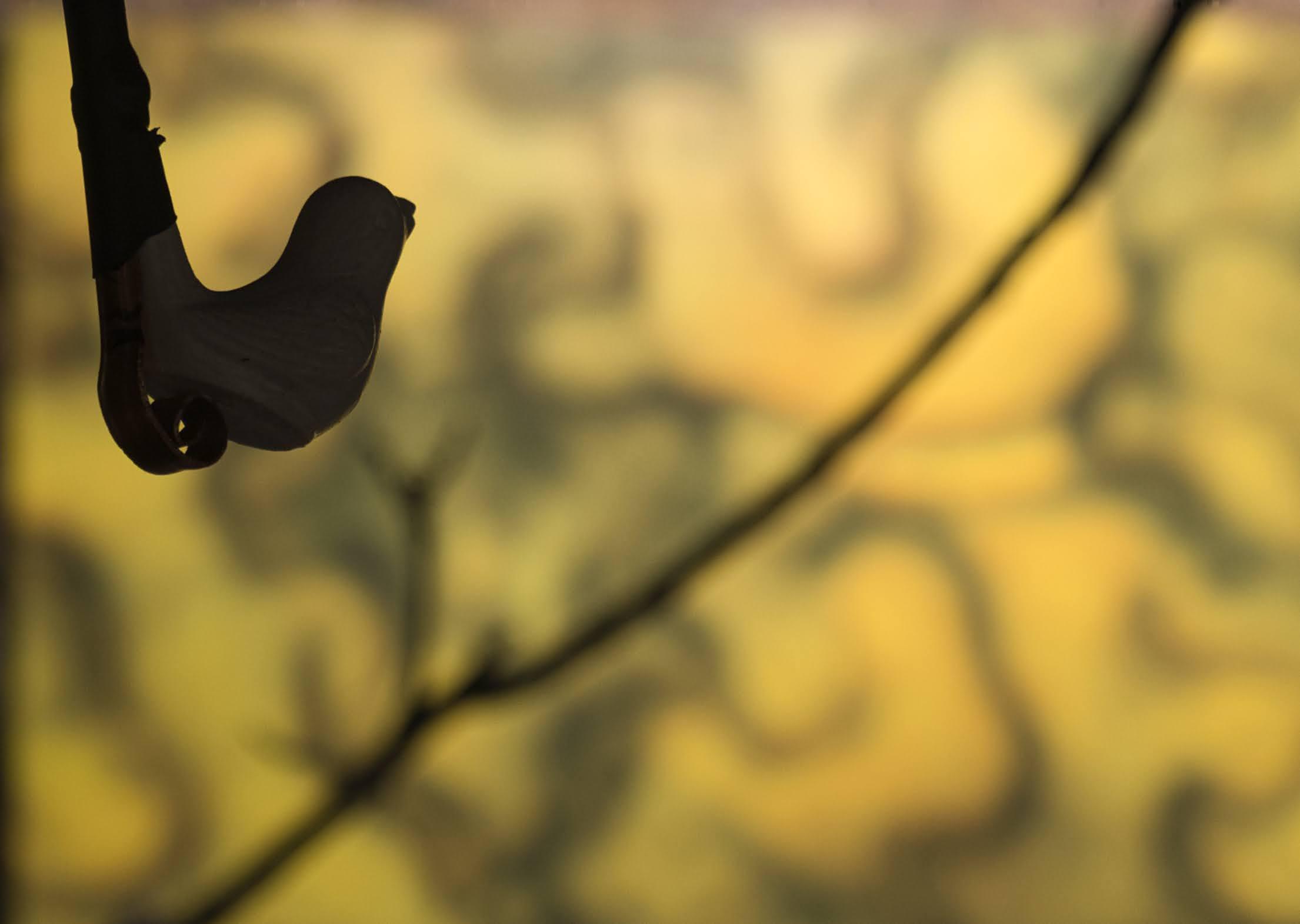 Balade contée «L'homme qui faisait chanter les arbres»